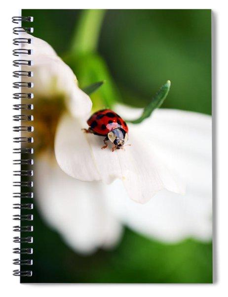 Sunshine And Petal Rest Spiral Notebook
