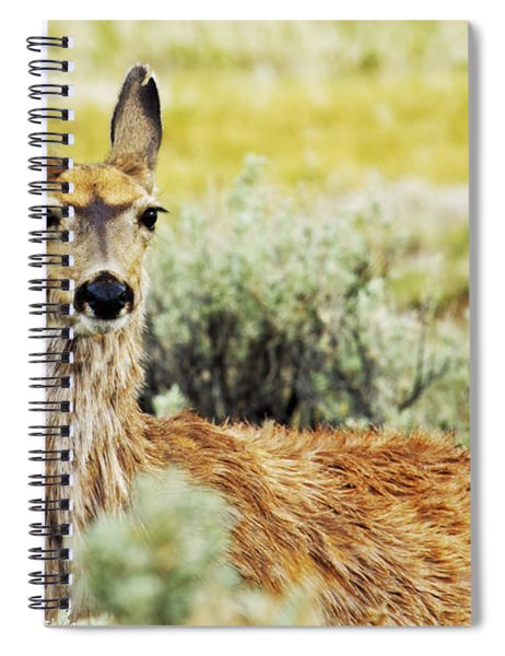 Surround Sound Spiral Notebook
