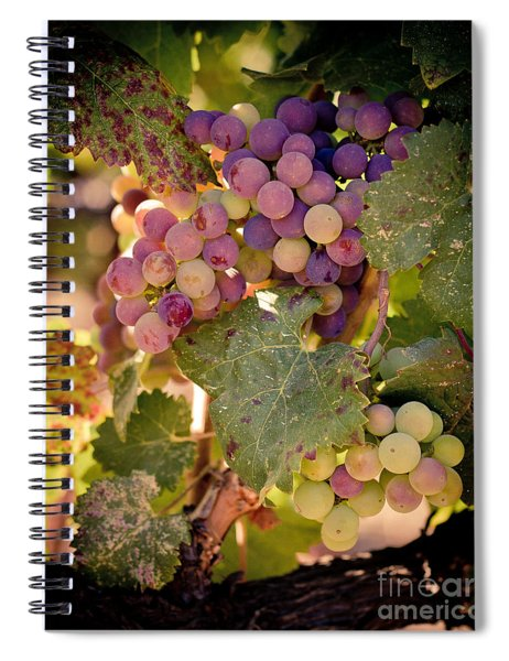 Sweet Grapes Spiral Notebook