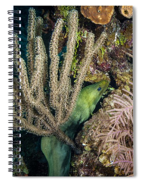 Swimming Moray Eel Spiral Notebook