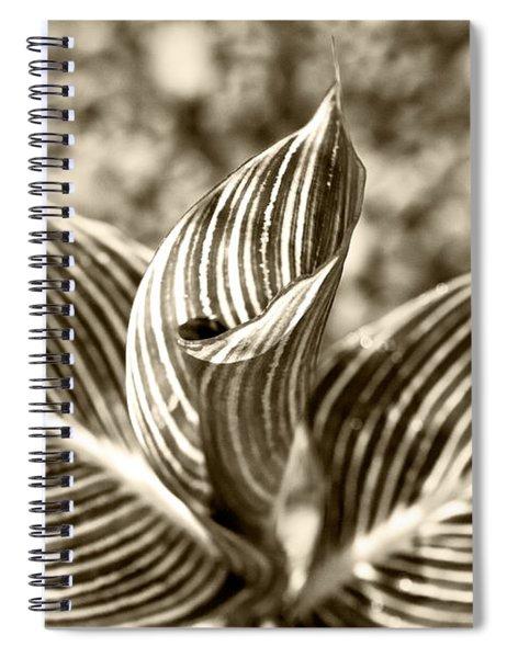 Swirls And Stripes Spiral Notebook
