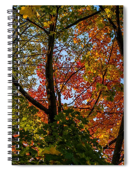 Tangle Spiral Notebook