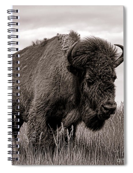 Tatanka Spiral Notebook