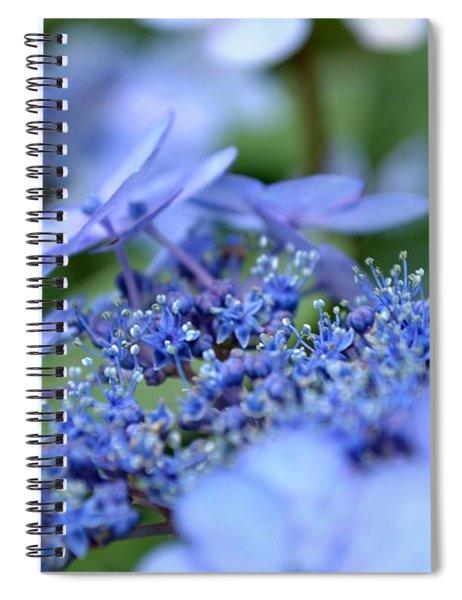 Spiral Notebook featuring the photograph Taube Lacecap Hydrangea by Scott Lyons