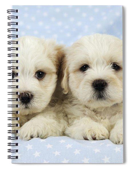 Teddy Bear Puppy Dogs Spiral Notebook