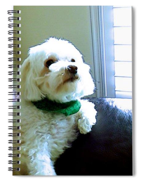 Teddy Spiral Notebook