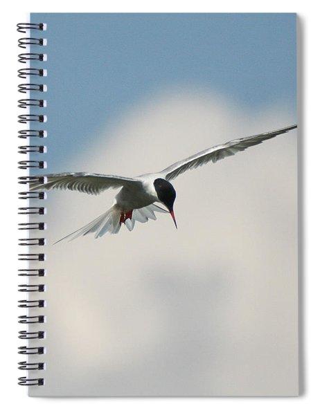 Tern In Flight Spiral Notebook