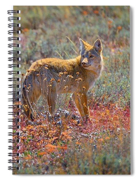 Teton Coyote Spiral Notebook