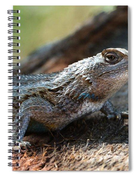 Texas Lizard Spiral Notebook