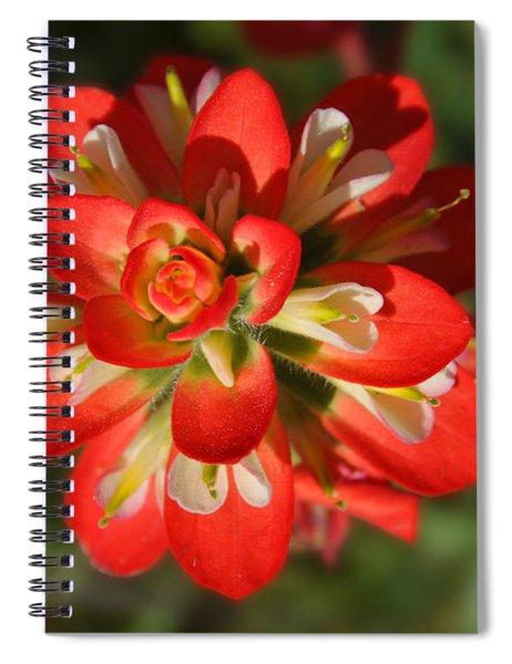 Texas Paintbrush Spiral Notebook