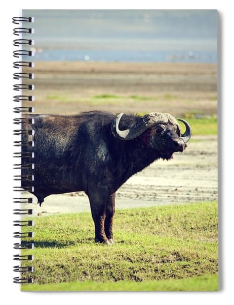 The African Buffalo. Ngorongoro In Tanzania. Spiral Notebook