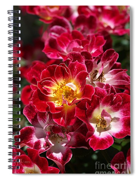 The Beauty Of Carpet Roses  Spiral Notebook