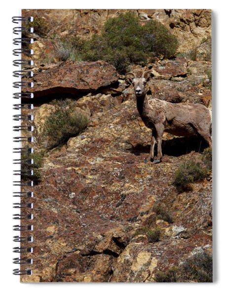 The Bighorn Uwe Spiral Notebook