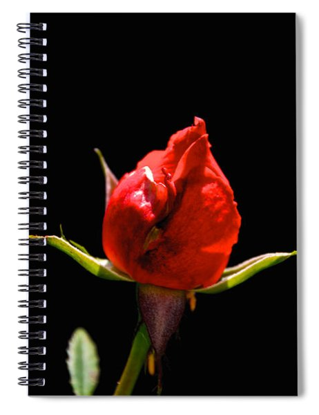 The Bud Spiral Notebook