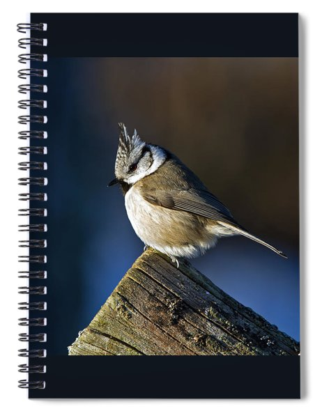The Crested Tit In The Sun Spiral Notebook