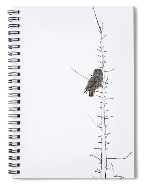 The Grey Hunter On White Spiral Notebook