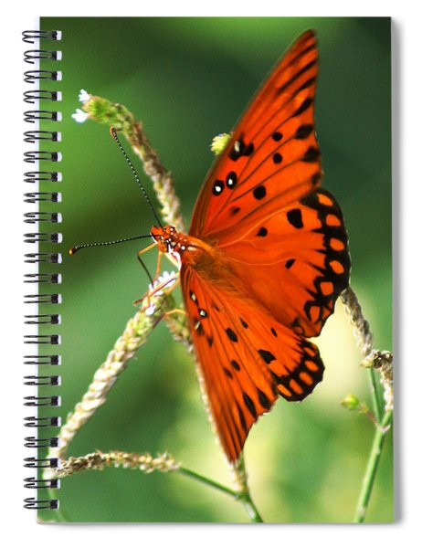 The Passion Butterfly Spiral Notebook