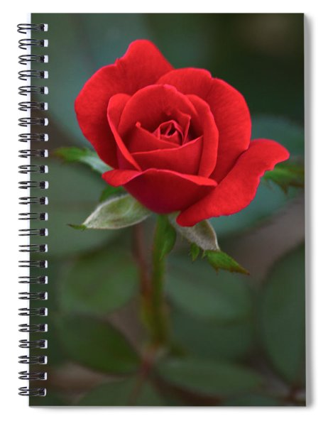The Perfect Rose Spiral Notebook