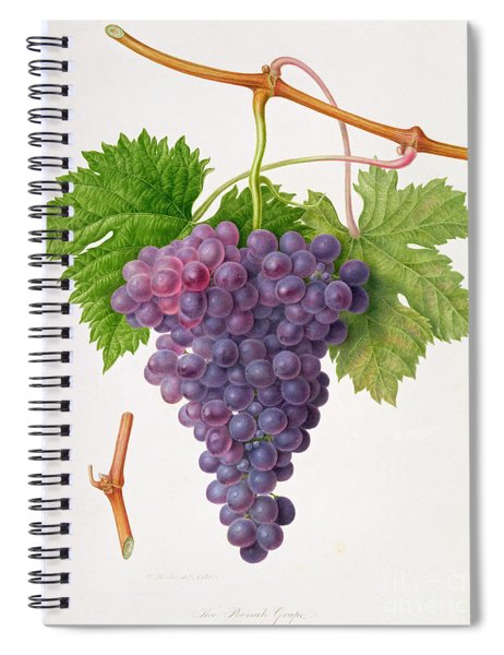 The Poonah Grape Spiral Notebook