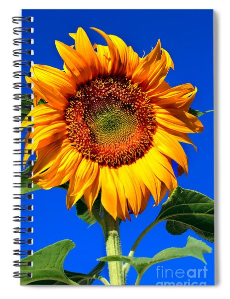 The Sunflower Spiral Notebook