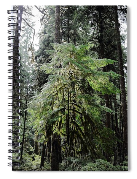 The Tree In The Forest Spiral Notebook