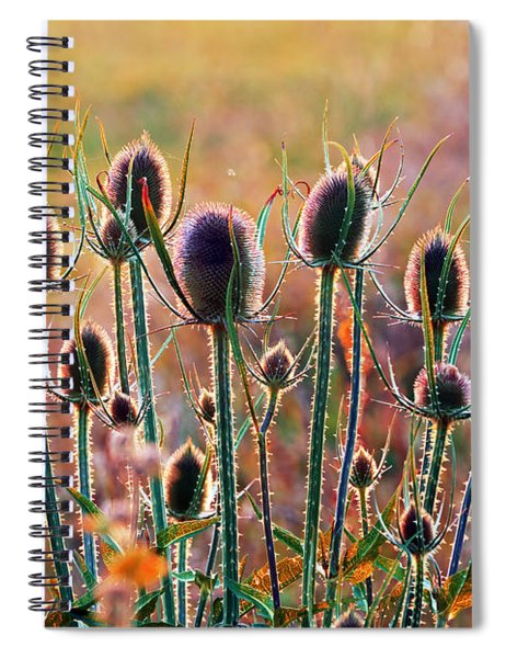 Thistles With Sunset Light Spiral Notebook
