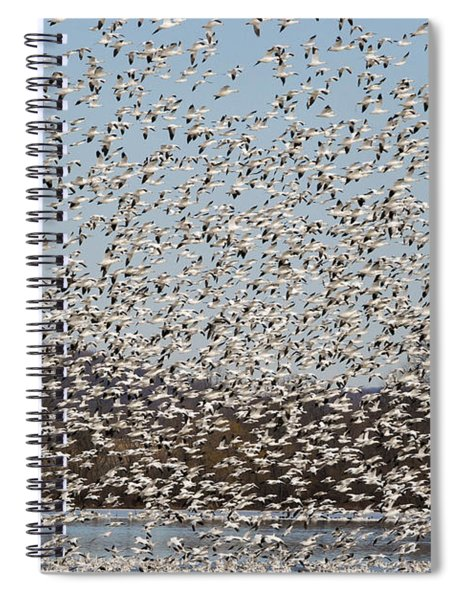 Thousands Of Snow Geese Spiral Notebook
