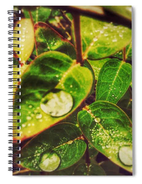 Three Coins In The Fountain Spiral Notebook