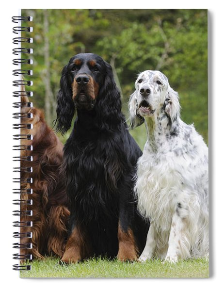 Three Different Setters Spiral Notebook