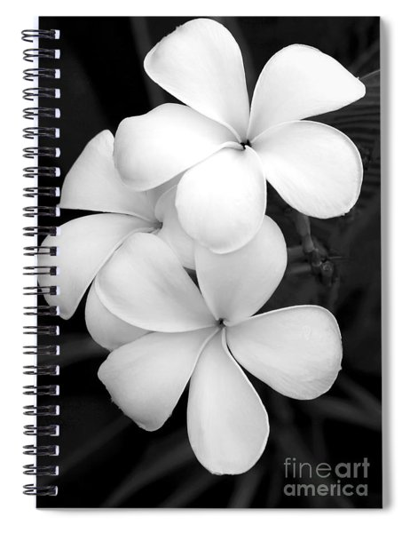 Three Plumeria Flowers In Black And White Spiral Notebook