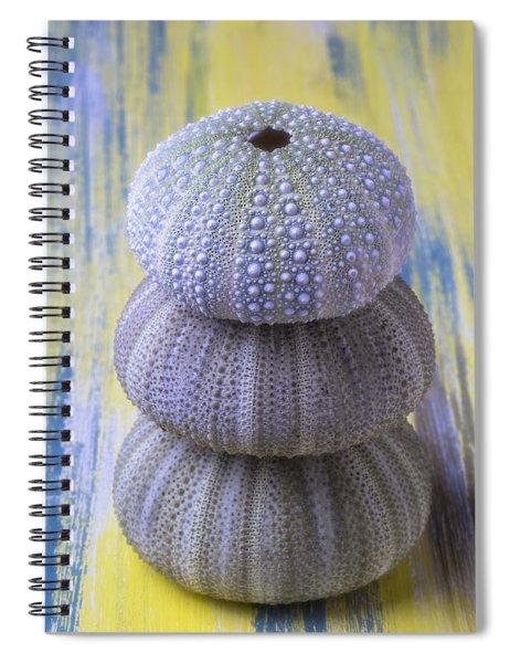 Three Sea Urchins Spiral Notebook