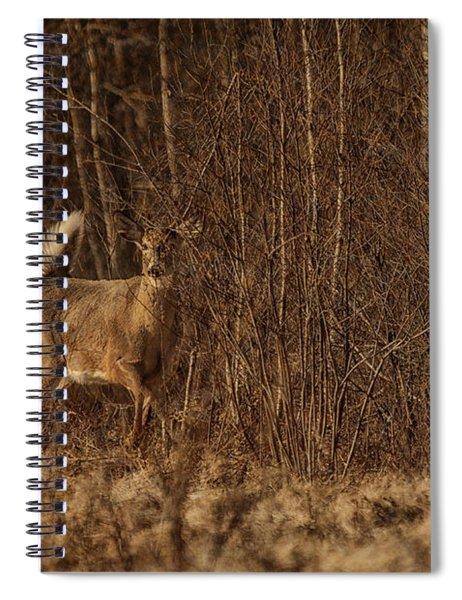 Through The Brush Spiral Notebook