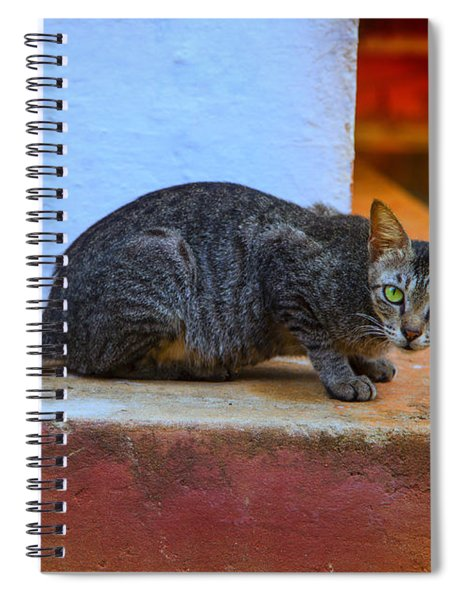 Tiger Cat With Luminous Eyes Spiral Notebook