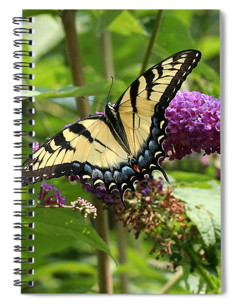 Tiger Swallowtail On Butterfly Bush Spiral Notebook