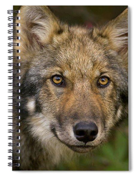 Timber Wolf In Denali Spiral Notebook