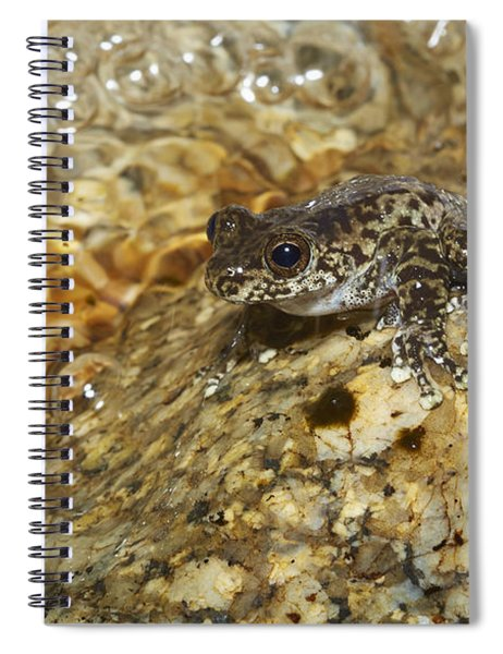 Torrent Treefrog Aka Waterfall Frog Spiral Notebook