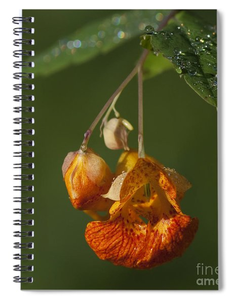 Touch Me Not.. Spiral Notebook