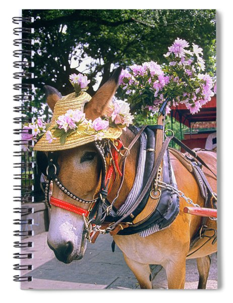 Tourist Carriage Mule Wearing Straw Hat Spiral Notebook