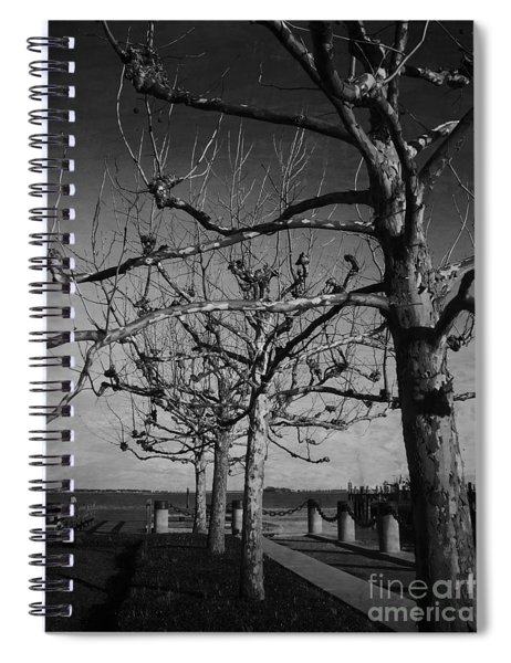 Tree In A Row  Spiral Notebook