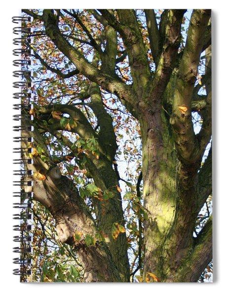 Tree In Sunlight Spiral Notebook