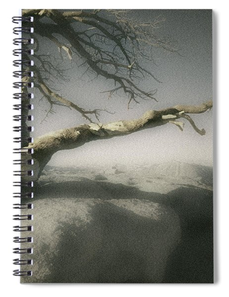 Tree Of Ages Spiral Notebook