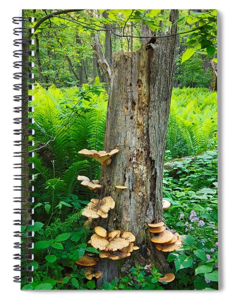 Tree Remnant Spiral Notebook