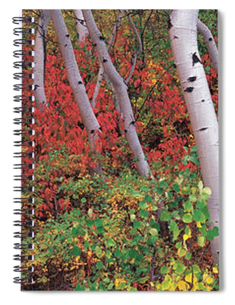 Trees In A Forest, Near Jackson Hole Spiral Notebook