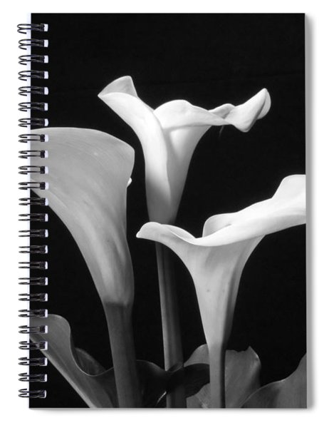 Trio Of White Calla Lilies In Black And White Spiral Notebook