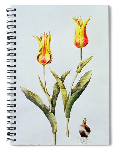 Tulipa Mona Lisa Spiral Notebook