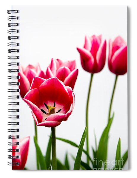 Tulips Say Hello Spiral Notebook