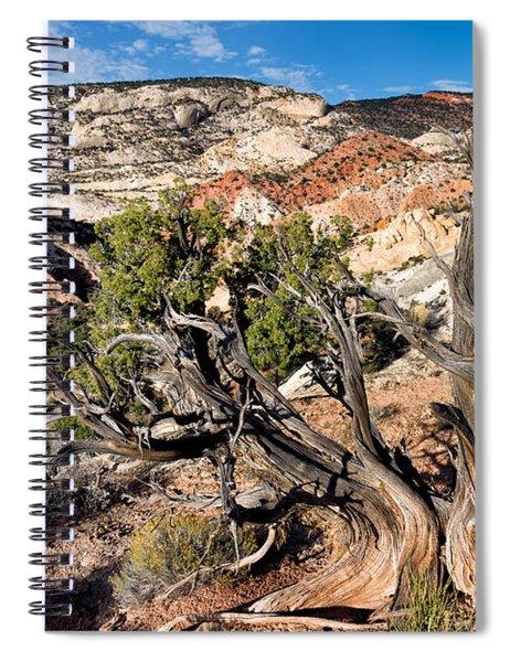 Twisted Snag Spiral Notebook