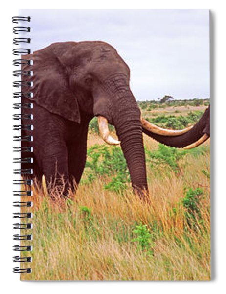 Two African Elephants Loxodonta Spiral Notebook