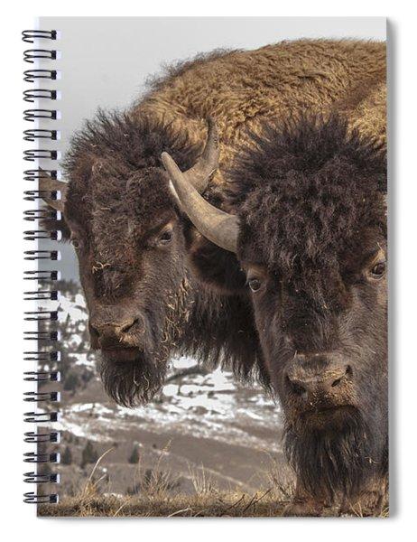 Two Bison Spiral Notebook
