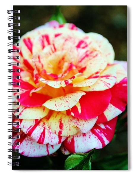 Two Colored Rose Spiral Notebook